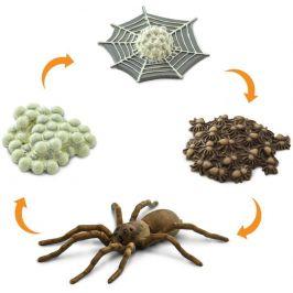 Safari Ltd. Životní cyklus - Pavouk