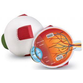 Learning Resources Pěnový model oka