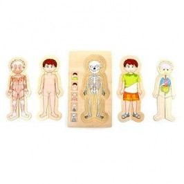 Puzzle - Anatomie Tim
