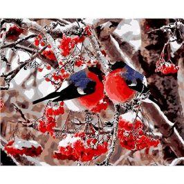 Malování podle čísel - Ptáčci v jeřabinách