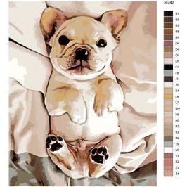 Malování podle čísel - Malé štěně buldočka 40x50 cm vypnuté plátno na rám