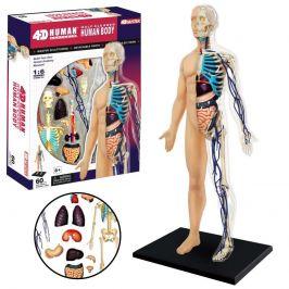 Anatomie člověka - tělo