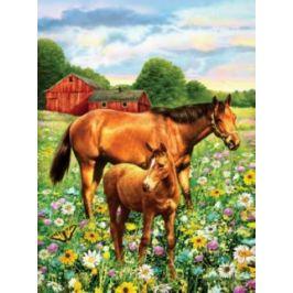 Malování podle čísel - Koně na pastvě